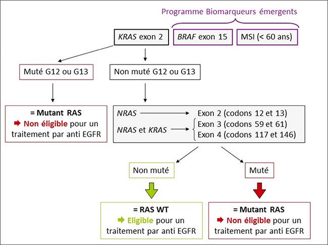 la-lettre-16-analyses-moleculaires-pour-le-CCRm-arbre-decisionnel